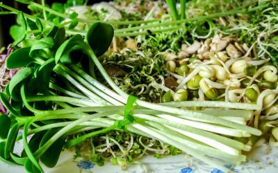 Kiełki Home&Kitchen Garden - opis wartości odżywczych