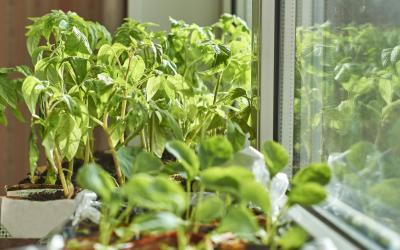 O wyższości domowej uprawy Home&Kitchen Garden warzyw nad uprawą masową