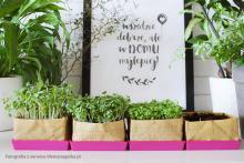 Lifemanagerka zachwyciła się zestawami do hodowli kiełków Home&Kitchen Garden