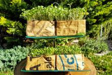 Kiełkami Home&Kitchen Garden można zastąpić dojrzałe warzywa