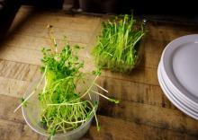 Ładne włosy dzięki kiełkom Home&Kitchen Garden